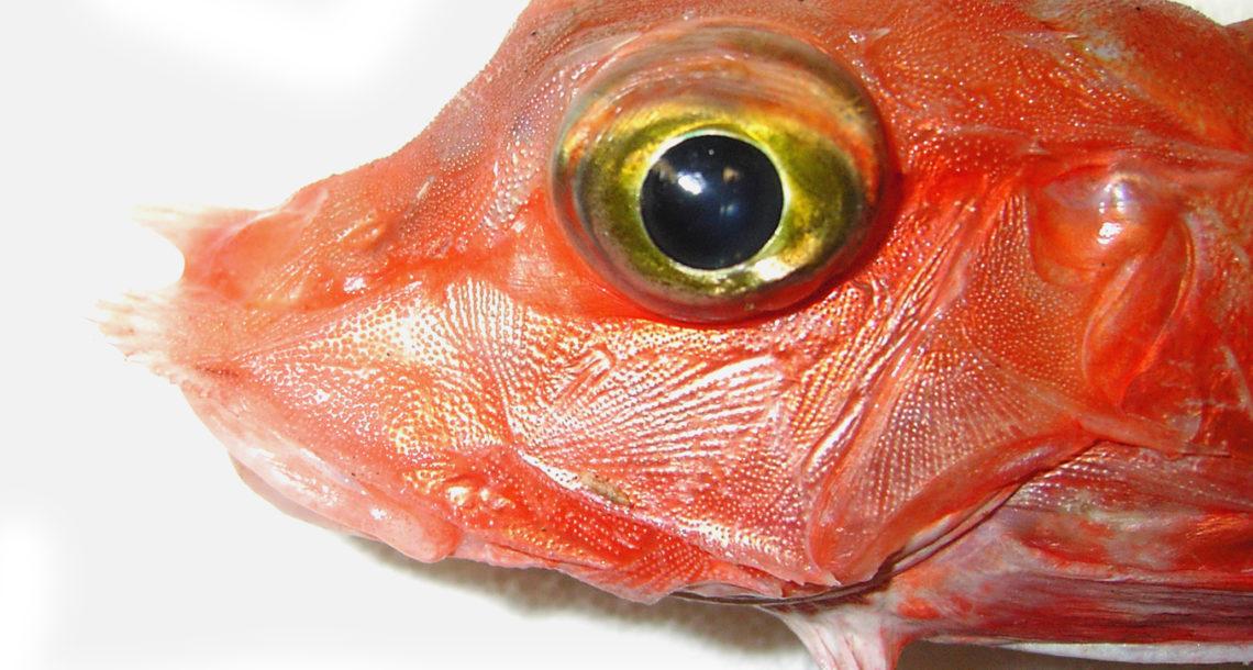 Occhio di un pesce freschissimo